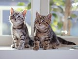 Cute & Charming Kittens Wallpapers (Vol.2) 32 pics